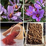 50 Saffron Bulbs Crocus Sativus Flowers Corms Original Turkey Bulbs Plant Bulbs