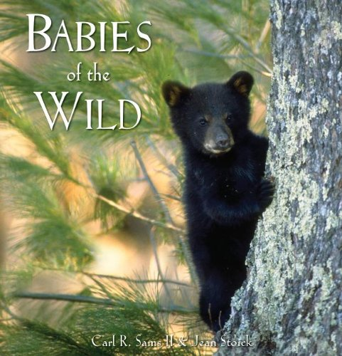 Babies of the Wild