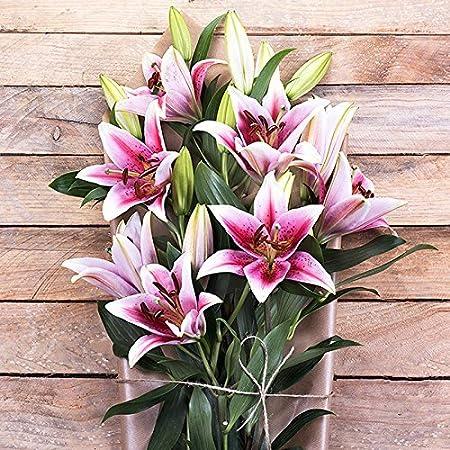 Flores Frescas Florachic - Lirios Rosas sin jarrón - flores enviadas directamente del campo a tu casa: Amazon.es: Jardín