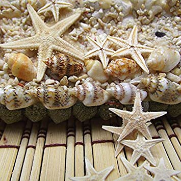 GraceAngie Micro View 40-Pack Natural Small Starfish For DIY Home Decoration Decor Sandy Beach 1.5-2.5