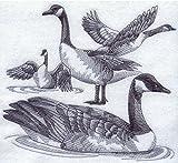 canada goose beige - Canada Goose Custom Embroidered Sweatshirt Shirt