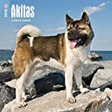 Akitas 2018 12 x 12 Inch Monthly Square Wall Calendar, Animals Dog Breeds