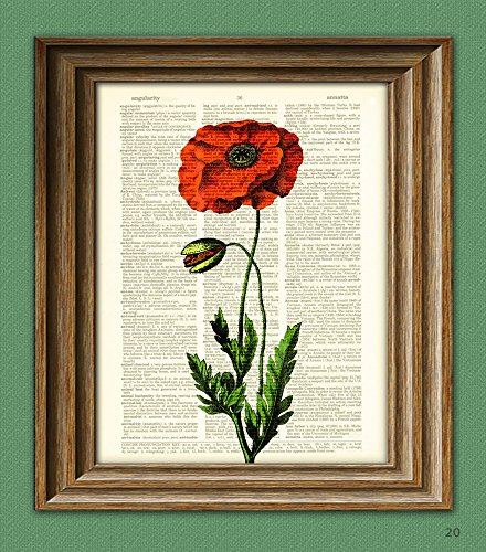- Red Poppy Poppies Flower botanical illustration beautifully upcycled dictionary page book art print