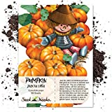 buy Package of 50 Seeds, Jack Be Little Miniature Pumpkin (Cucurbita pepo) Non-GMO Seeds by Seed Needs now, new 2020-2019 bestseller, review and Photo, best price $3.85