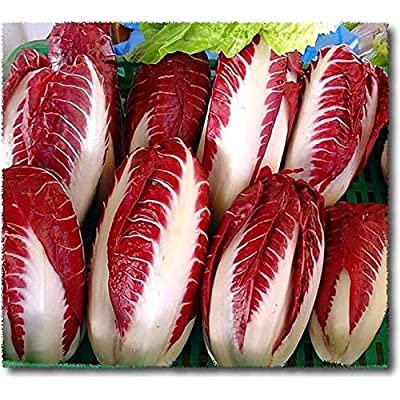 Radicchio Seeds, Rossa di Treviso -Deep Brilliant Red- Flavorful bite to Salads!(100 - Seeds) : Garden & Outdoor