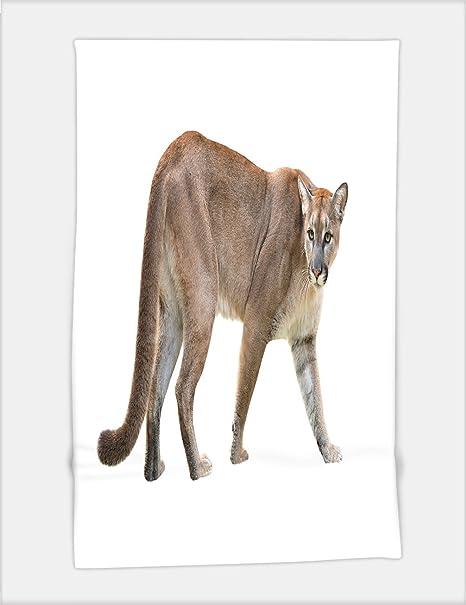 specjalne wyprzedaże rozmiar 40 informacje o wersji na Minicoso Bath Towel puma or cougar isolated on white ...