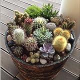 ADB Inc 2016 20 CACTUS MIX Seeds Giganteus & RARE varieties~beautiful gardens