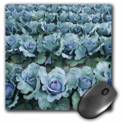 3dRose Cabbage, Harlow Farm, Westminster, Vermont - US46 JMO0326 Mouse Pad, 8