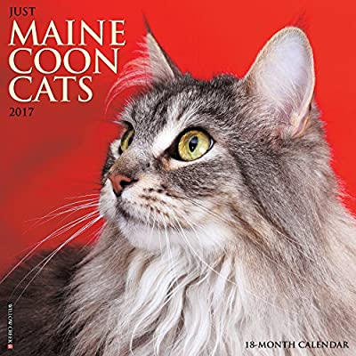 2017 Just Maine Coon Cats Wall Calendar
