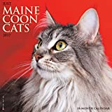 Just Maine Coon Cats 2017 Wall Calendar
