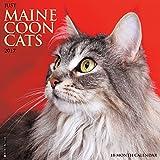 Just Maine Coon Cats 2017 Wall Calendar (Cat Breed Calendars)
