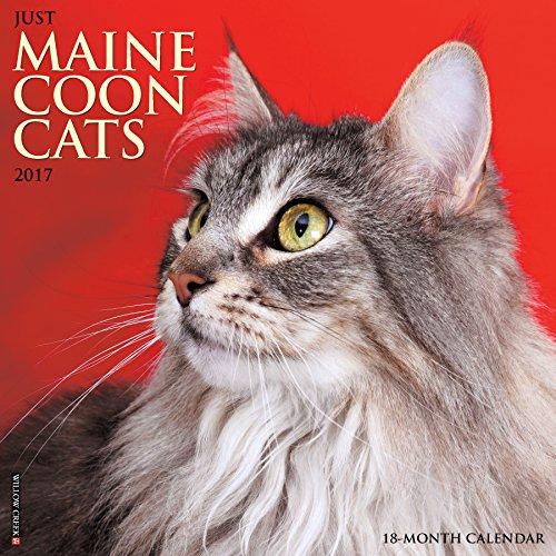 Just Maine Coon Cats 2017 Wall Calendar  Cat Breed Calendars