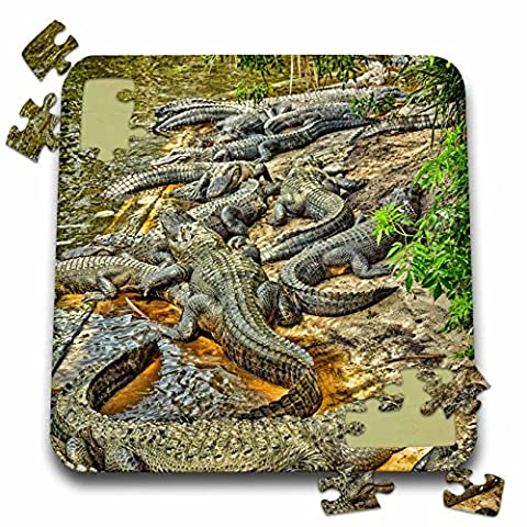 Danita Delimont - Reptile - A congregation of alligators, Florida. - 10x10 Inch Puzzle - Alligator Puzzle