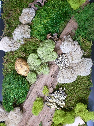Preserved Moss and Fern Wall Hanging
