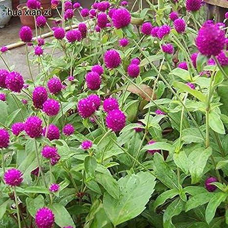 Creative Ideas For Home Garden