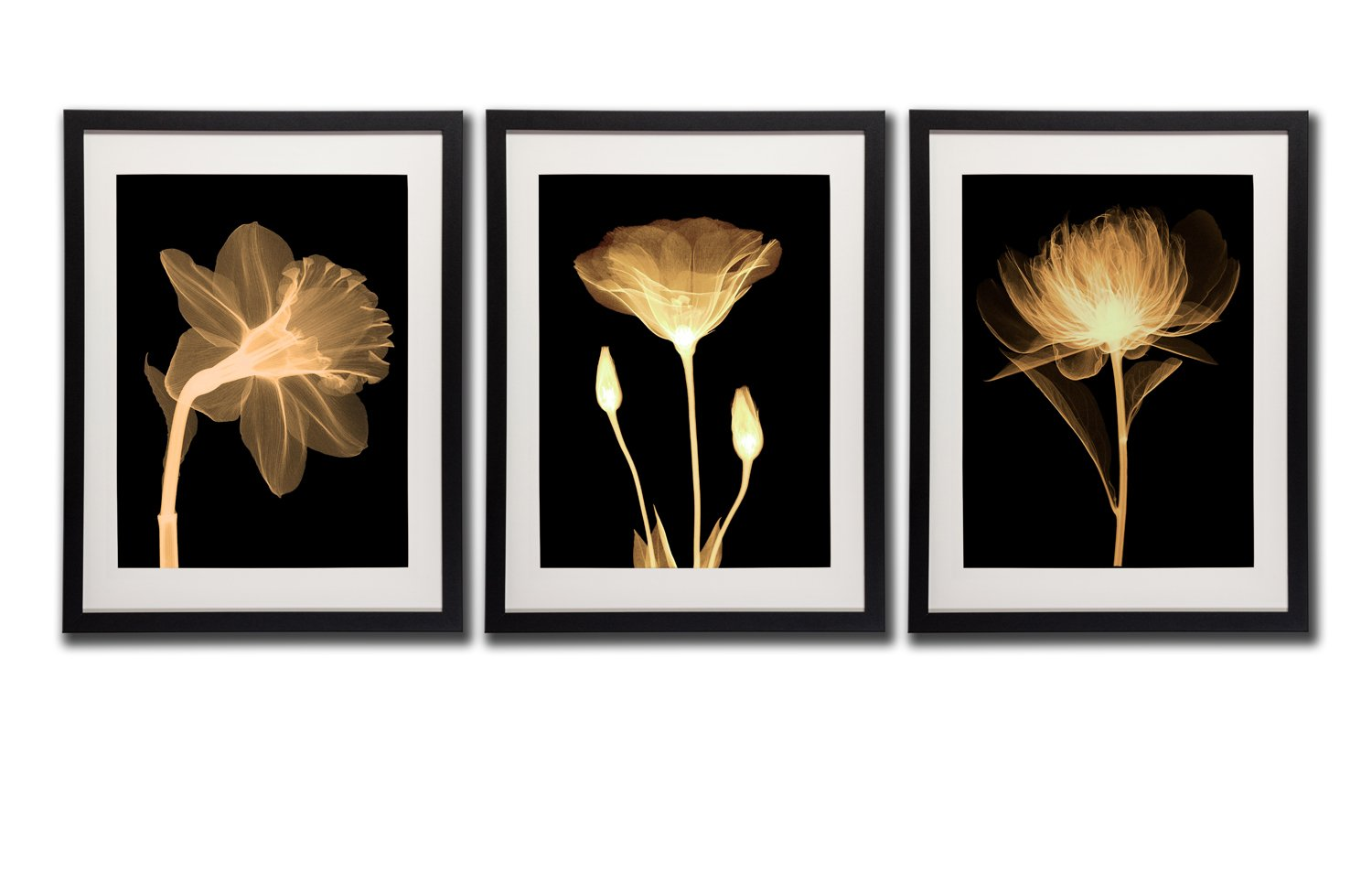 Black white and gold wall art canvas prints decor framed flowers painting poster printed on canvas poppy flower pictures 3 piece black frames white mat