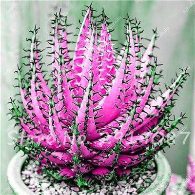 30 semillas Aloe piezas raras de color plantas suculentas mini jardín Plantar, comestible de semilla de fruta de belleza vegeable Cactus Rebutia hierbas de la planta 11: Amazon.es: Jardín