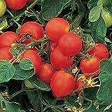 hanging cherry tomato kit - Burpee Tumbler Hybrid Tomato Seeds 10 seeds