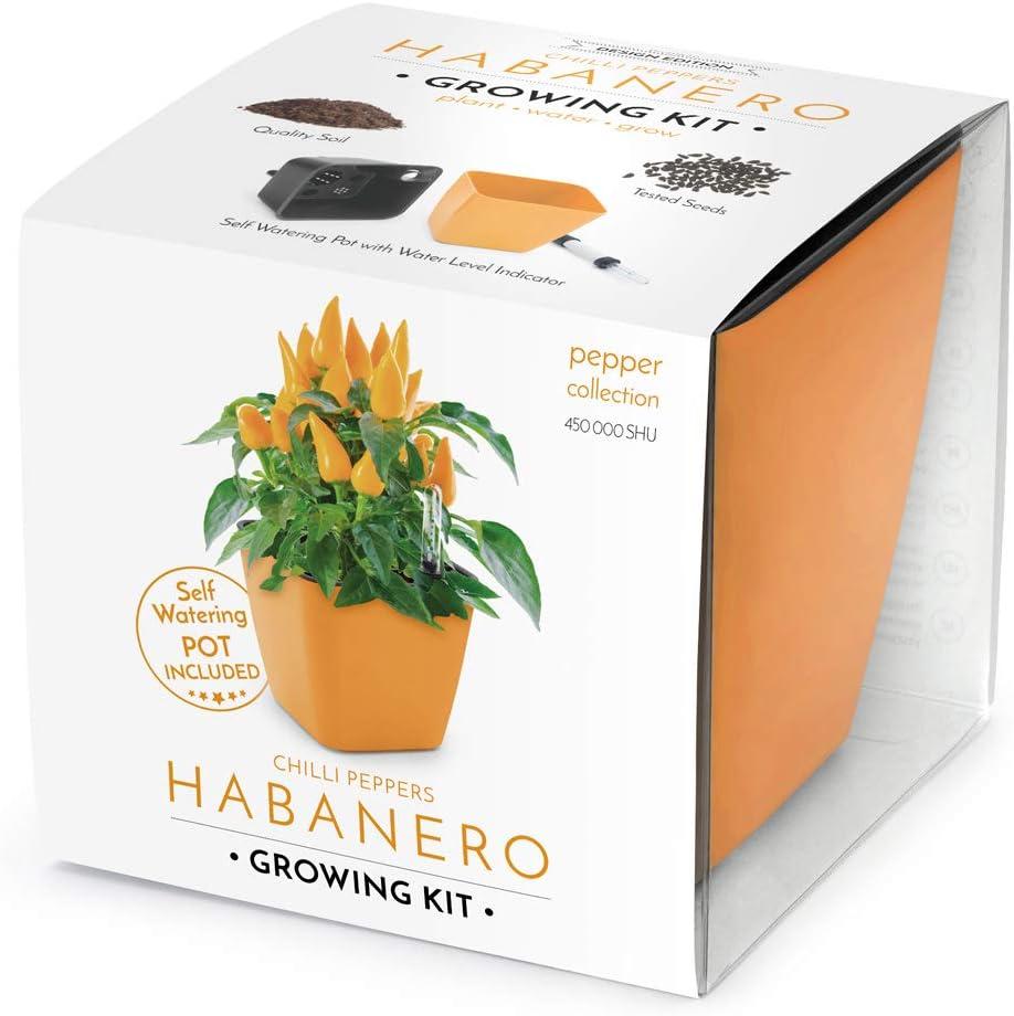 Domestico Kit de Habanero para cultivar, Habanero growing kit, All-In-One set - hidrojardinera 13x13 cm, semillas testadas, sustrato fresco con nutrientes