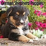 German Shepherd Puppies 2019 Wall Calendar