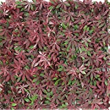 Youmeng 4 Piece Artificial plant product, Wall Decor, Privacy Fence Panel, 20'' L x20'' W (Red, 20 '' x 20 '')