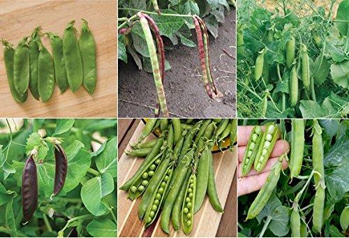 David's Garden Seeds Collection Set Pea GP6611 (Multi) 6 Varieties 600 Seeds (Open Pollinated, Heirloom, Organic) by David's Garden Seeds