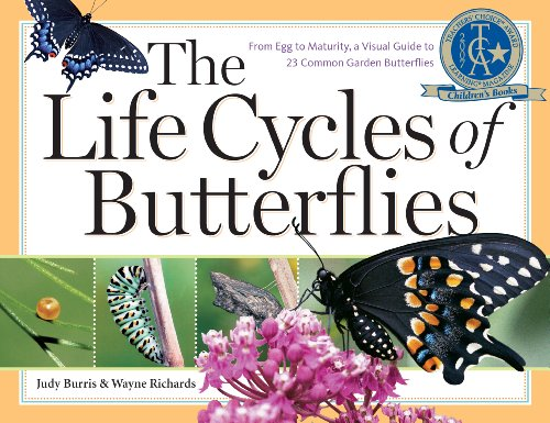 The Life Cycles of Butterflies: From Egg to Maturity,