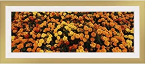 "GREATBIGCANVAS Flowers at Sequoia Park Humboldt Co Eureka CA Gold Framed Wall Art Print, 36""x12""x.75"