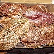 SunGrow 100 Pcs. Catappa Ketapang Indian Almond Leaf for Fish Tank