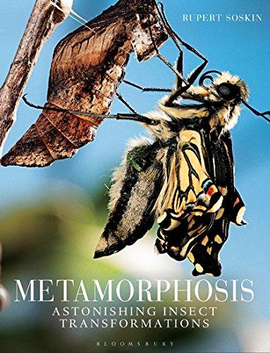 Download Metamorphosis: Astonishing insect transformations ebook