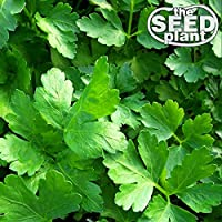 Plain Italian Parsley Seeds