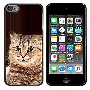 TECHCASE---Cubierta de la caja de protección para la piel dura ** Apple iPod Touch 6 6th Touch6 ** --Jugar el gato Bobtail americano Manx Marrón
