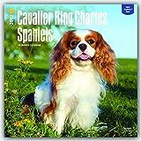 Cavalier King Charles Spaniels 2017 Square
