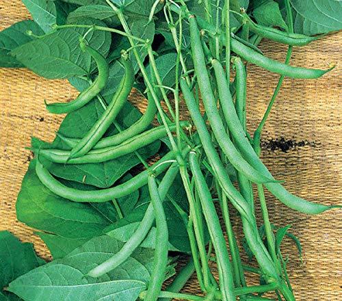 (Climbing Green fasold French Beans 50 Organic Seeds f1 Hybrid UK Grown Late)