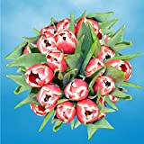 GlobalRose 30 Stems of Red and White Bicolor Tulips Flowers - Fresh Flowers for Delivery