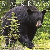 Search : Black Bears 2019 Wall Calendar