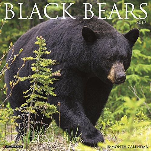 Black Bears 2019 Wall Calendar (Bear Calendar)