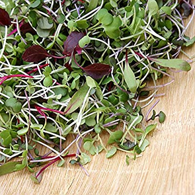 5,000+ Microgreens Seeds- Red Russian Kale