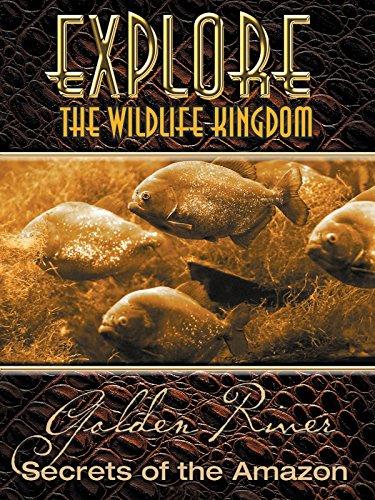 Explore The Wildlife Kingdom  Golden River  Secrets Of The Amazon