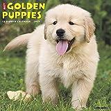 Just Golden Puppies 2019 Calendar