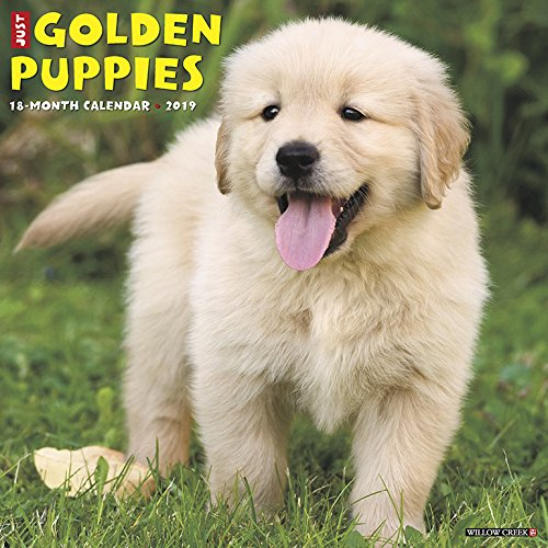 Just Golden Puppies 2019 Wall Calendar (Dog Breed Calendar)