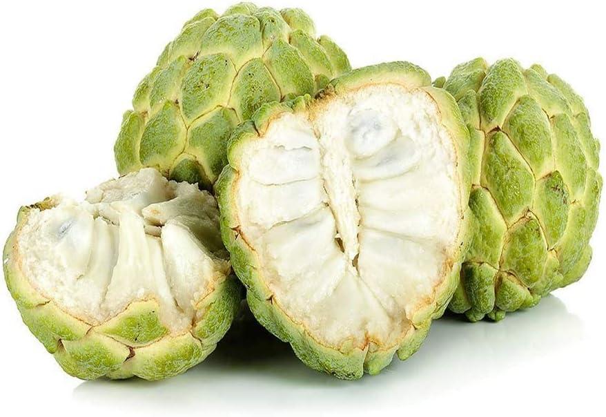 Sugar Apple SẸẸDS - 20+ - Custard Apple (Sweetsop) - Annona Squamosa SẸẸDS - Apple Sugar SẸẸDS- Thai Sugar Apple SẸẸDS
