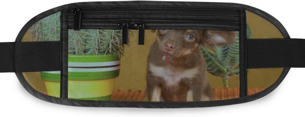 Chihuahua Hat Cactus On Gold Running Lumbar Pack For Travel Outdoor Sports Walking Travel Waist Pack,travel Pocket With Adjustable Belt