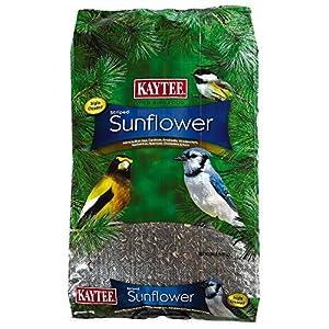 Kaytee Wild Bird Striped Sunflower, 20-Pound 103