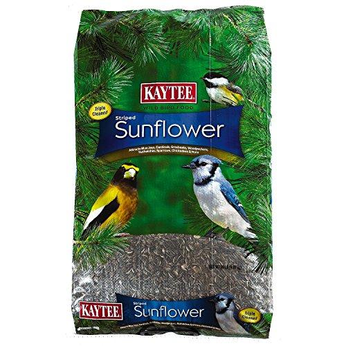 Kaytee Wild Bird Striped Sunflower, 20-Pound by Kaytee