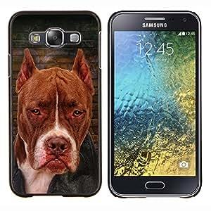 YiPhone /// Prima de resorte delgada de la cubierta del caso de Shell Armor - Perro Terrier Marrón Raza Canina - Samsung Galaxy E5 E500