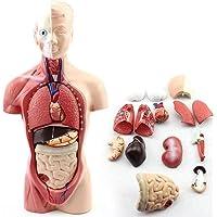Menselijk Lichaamsmodel, Medisch Menselijk Anatomisch Model Paspop Dummy Rubber Volledig Lichaam Anatomie Fysiologie…