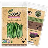 CERTIFIED NON-GMO SEEDS (Appr. 100) - Blue Lake Pole Bean - Bean Seeds, Open Pollinated - Untreated, Non Hybrid Vegetable Seeds - USA