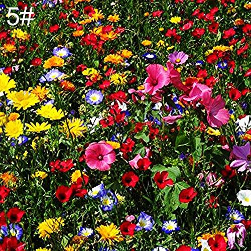 Rose Iris Tectorum Sunflower Cobaea Scandens Seed, 50Pcs Wild Flower Seeds Garden Yard Floor Cover Ornamental Plant Home Decor - 5# Wild Flower Seeds ()