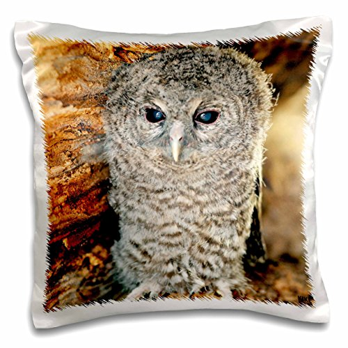 - Kike Calvo Animals - Tawny Owl, Strix aluco One month young owl Aragon Spain - 16x16 inch Pillow Case (pc_9903_1)